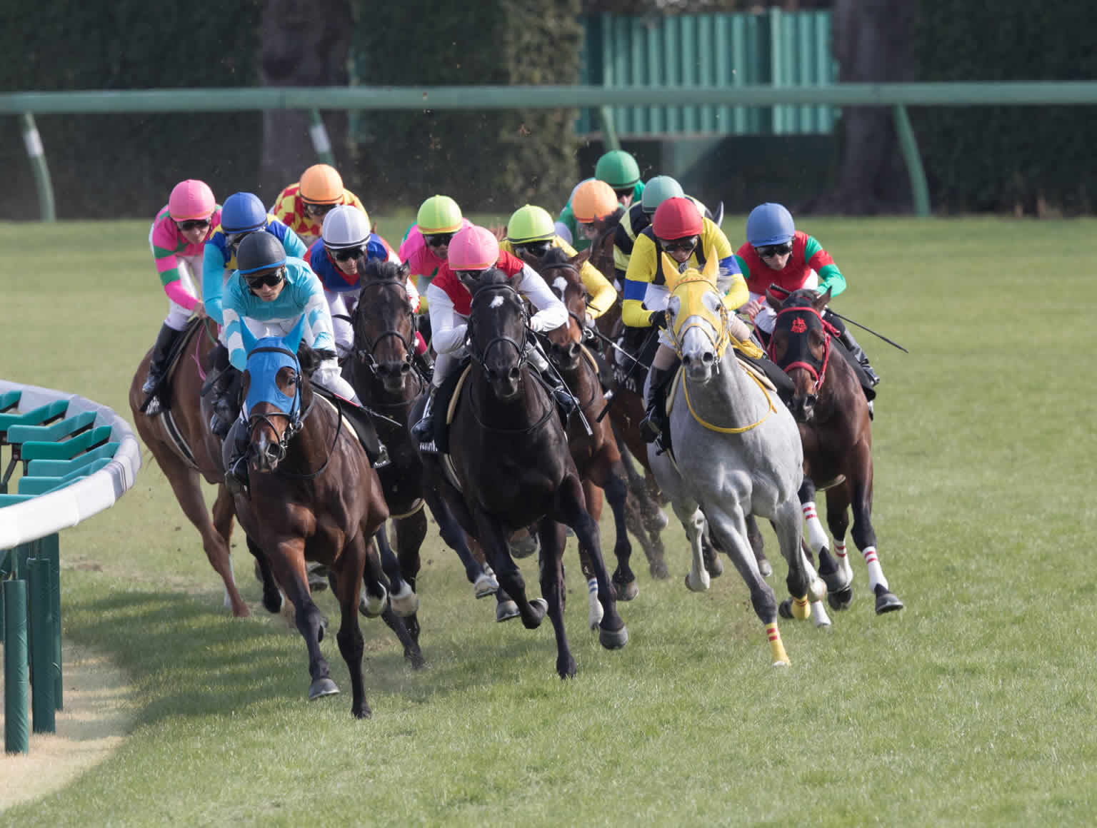 Jockeys dressed in colourful silks racing horses around a track